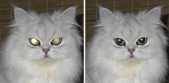 https://i1.wp.com/tintguide.com/image/program/fix-red-eye-cat.jpg?w=696