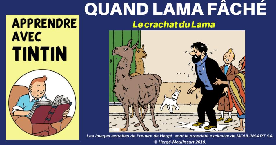 LE CRACHAT DU LAMA : LE CAPITAINE EN SAIT QUELQUE CHOSE…