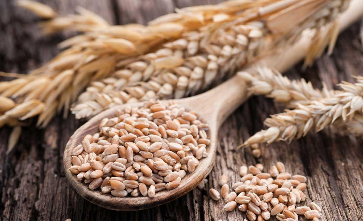 Khuyến nghị giao dịch Lúa mì ngày 02/03/2021: Ưu tiên các lệnh bán tại thời điểm này.