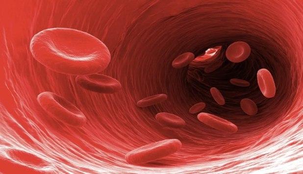 peredaran darah