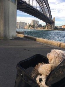Checking out The Bridge