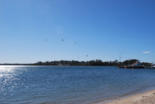 Birdlife & Beaches