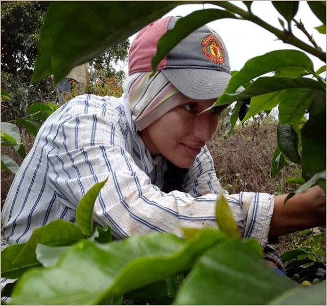 Tambo Quinde Coffee Farm Kickstarter