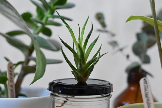 Urban Jungle anfangen wie, Urban Jungle, Zimmerpflanzen, Houseplants, nachhaltige Pflanzen