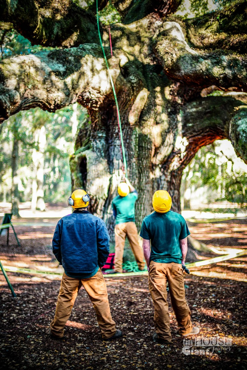 Men carefully trimming the tree