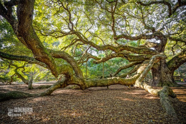 THGJ Angel Oak - 0007