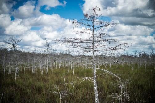 THGJ Everglades - 0001