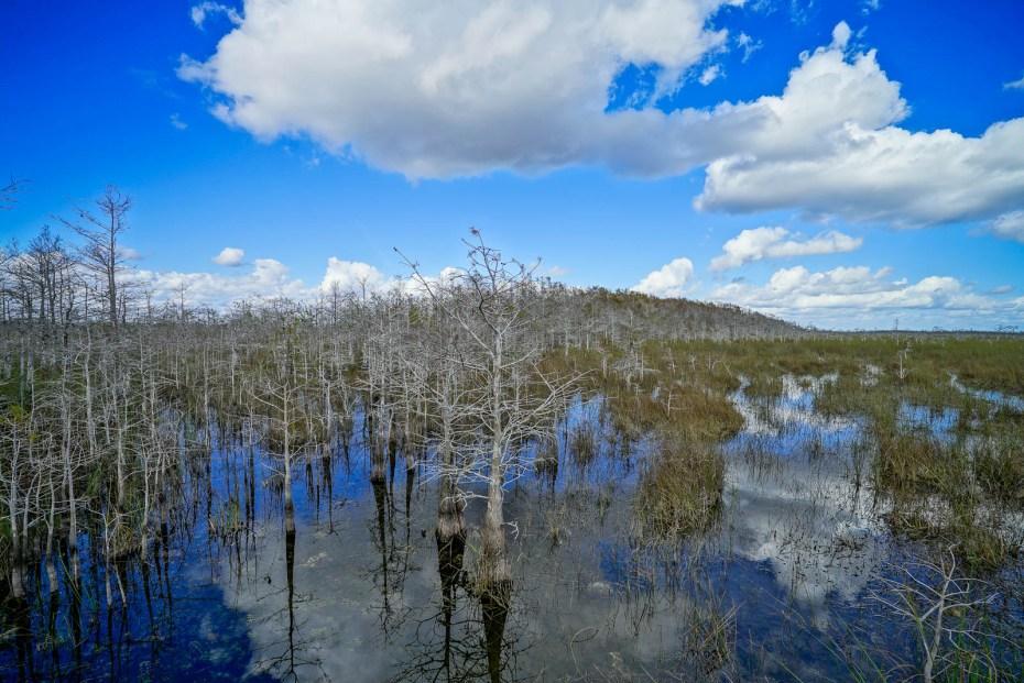 THGJ Everglades - 0004