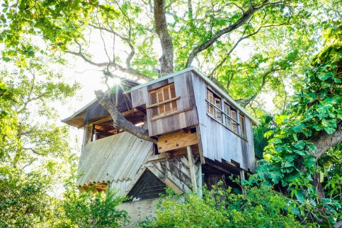 Top Level of the Tree House