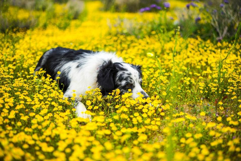THGJ California Wild Flowers - 0006