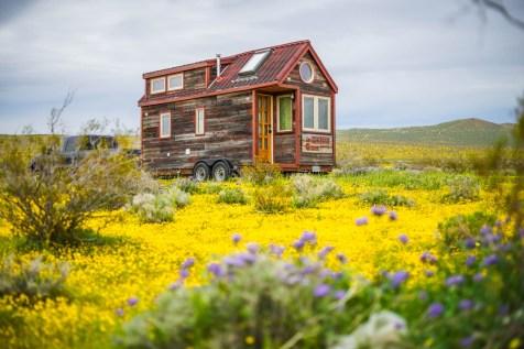 THGJ California Wild Flowers - 0017
