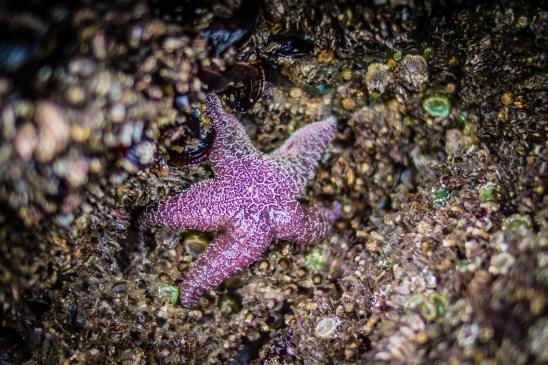 Oregon Coast Short Beach - 0010