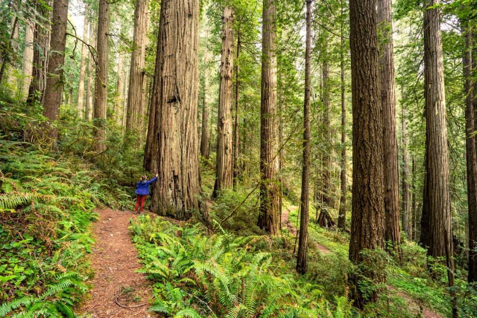 Damnation Creek Trail Hike - 0009