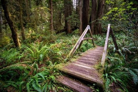 Fern Canyon Hike - 0016