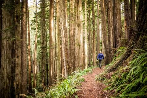 Fern Canyon Hike - 0020