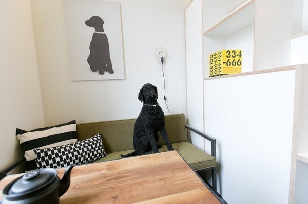 Awesome Dog in a Really Tiny Studio Apartment