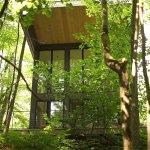 850 sq ft modern cabin in the forest via faircompanies 001
