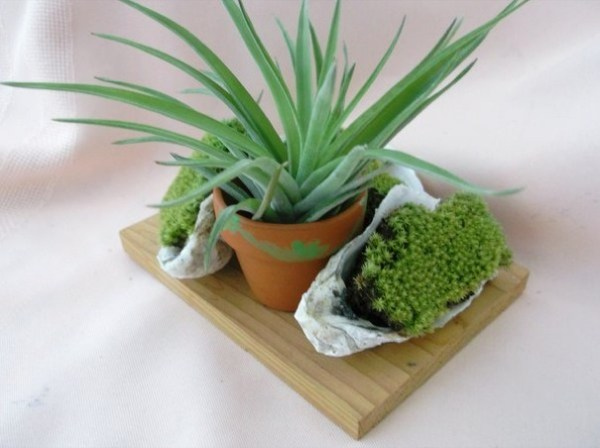 Air-Plants-for-Tiny-Houses-by-Linda-Branch-004
