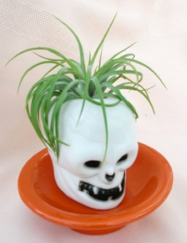 Air-Plants-for-Tiny-Houses-by-Linda-Branch-005