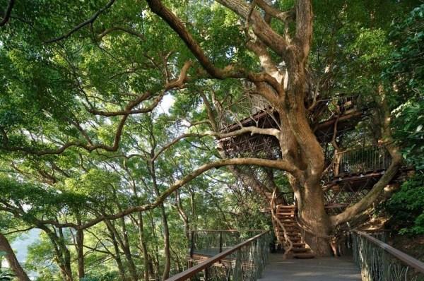 Bird's Nest Treehouse by Hiroshi Nakamura 006