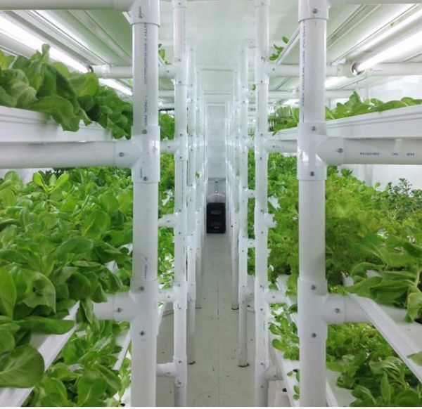 High Tech Shipping Container Greenhouse Farm 02