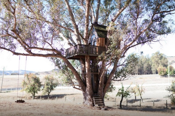 Multi-Level Treehouse in 110 ft. Eucalyptus Tree-001
