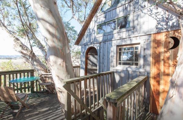 Multi-Level Treehouse in 110 ft. Eucalyptus Tree-004