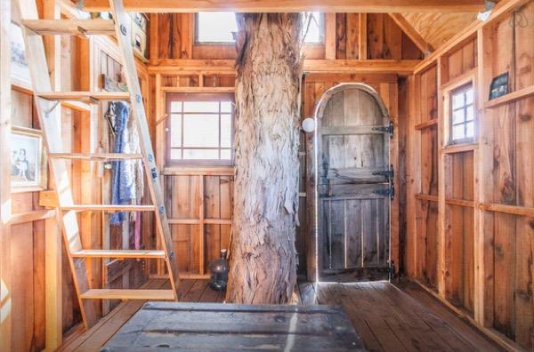 Multi-Level Treehouse in 110 ft. Eucalyptus Tree-007