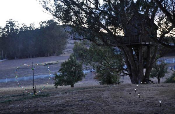 Multi-Level Treehouse in 110 ft. Eucalyptus Tree-020