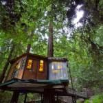 Redwood Treehouse 001