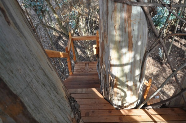 wooden stairs up to the cabin in the trees