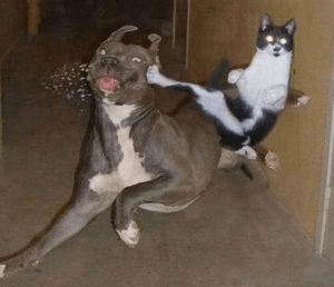 Funny Pic of Cat Jump Kicking Dog