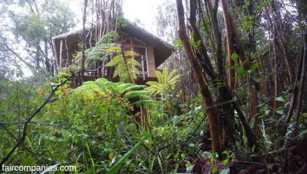 kristie-wolfes-hawaii-off-grid-treehouse-cabin-03