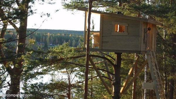 ufo-like-treehouses-in-forest-006