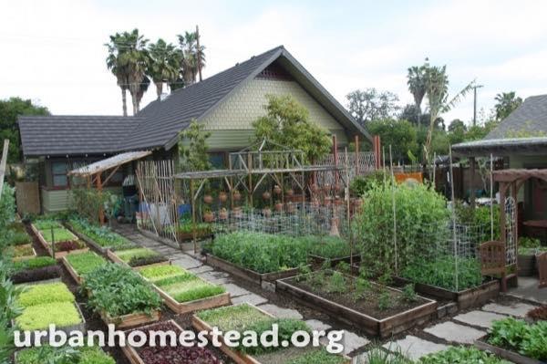 urban-homestead-family-in-la-tiny-organic-farm-001