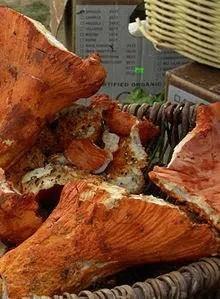 Lobsters Mushrooms