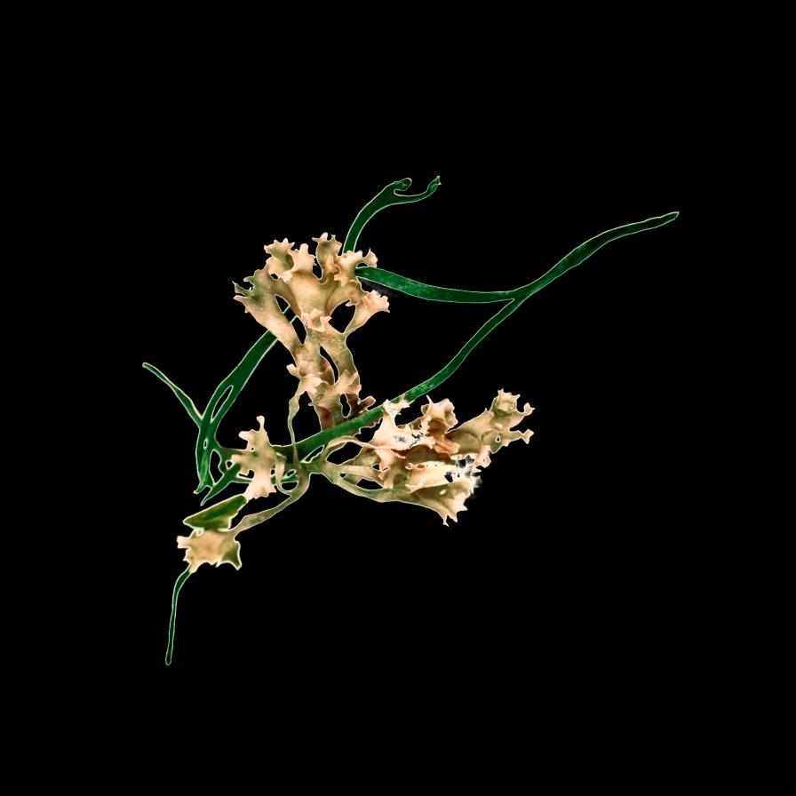 briskin-aqua_botanica3