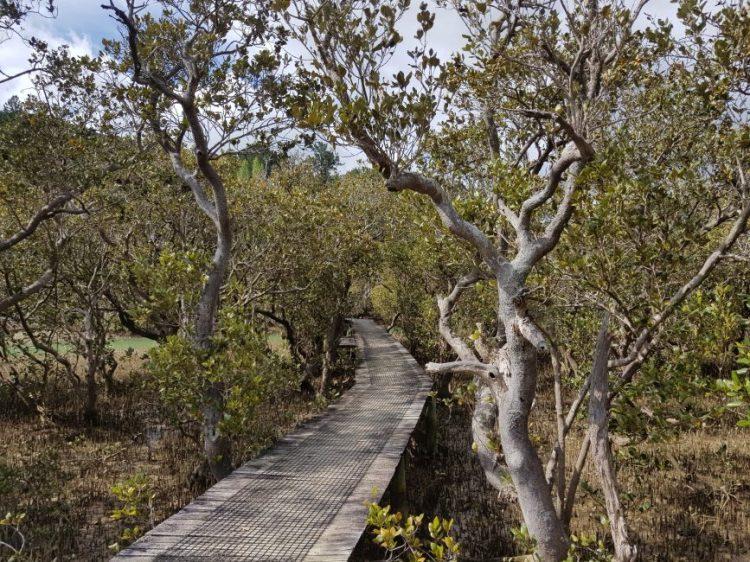 Te Araroa Trail Day 13 - Paihia - Opua Coastal Walkway