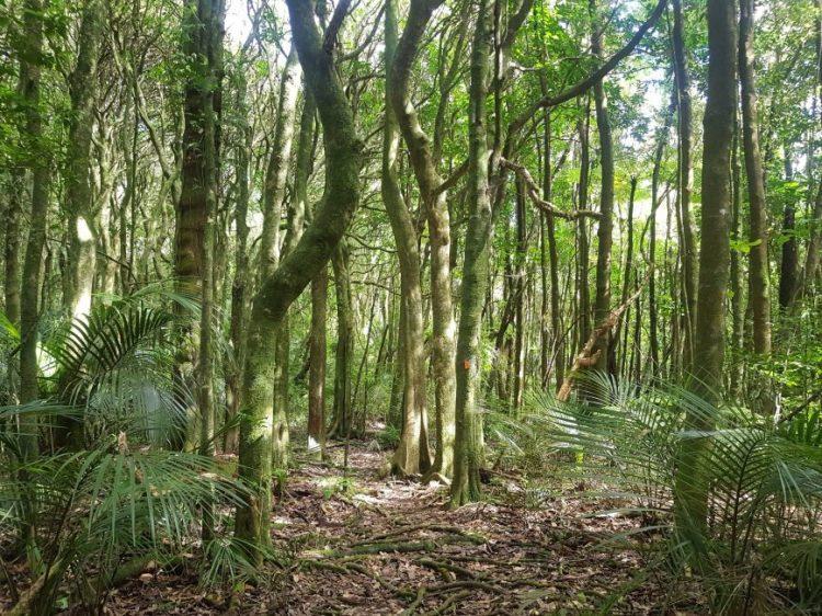 Te Araroa Trail Hakarimata ranges