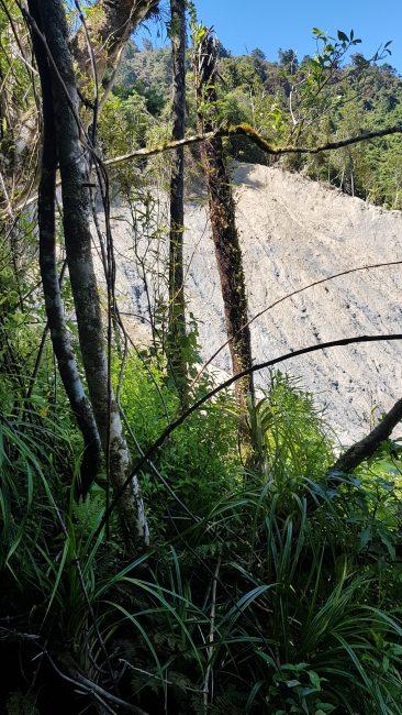 Te Araroa Trail Day 65 - When I ran out of path