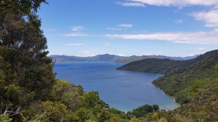 Te Araroa Trail Queen Charlote Track