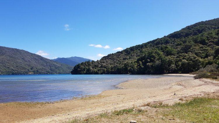 Te Araroa Trail Day 77 - Queen Charlotte track, Davies Bay
