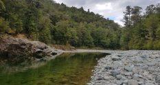Te Araroa Trail Day 80 - Pelorous Bridge track
