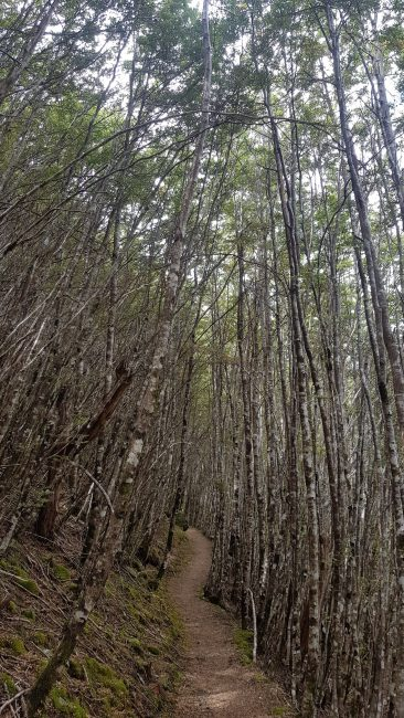 Te Araroa Trail Day 104 - Greenstone track