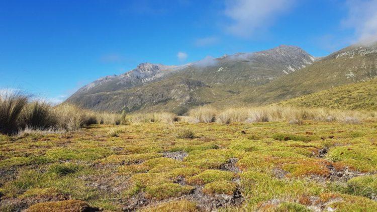 Te Araroa Trail Day 105 - More tussock