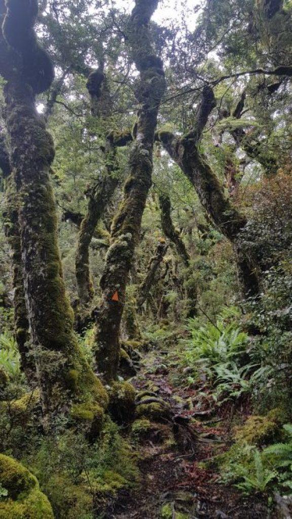 Te Araroa Trail Day 112 - Longwood Forest