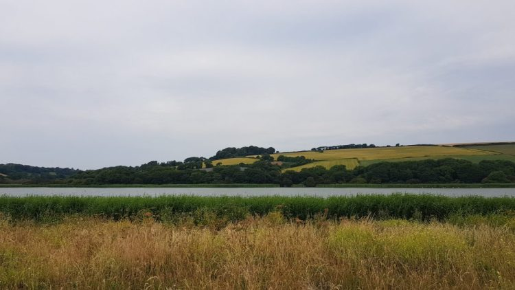 The nature reserve at Slapton Ley