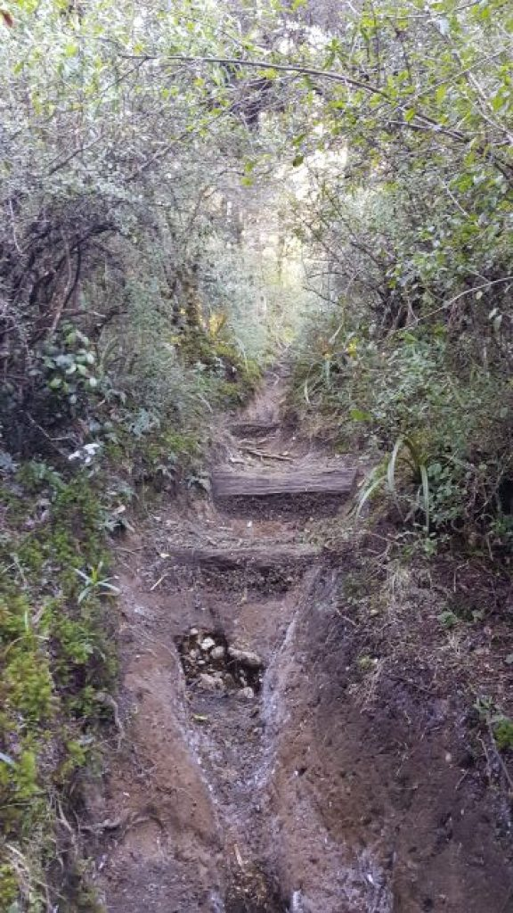 Frosty Mount Urchin Track