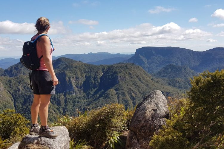 Views over Coromandel Forest Park