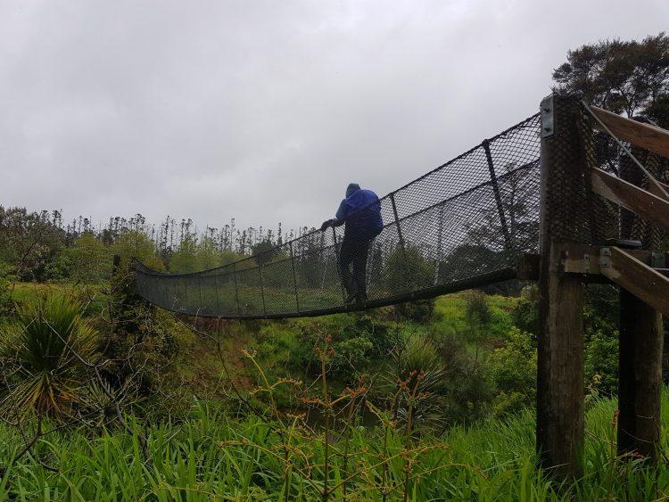 Swingbridge on the Kerikeri river walk